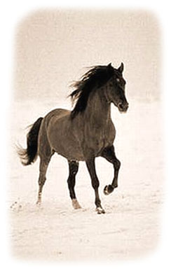 Horses need special care in the winter