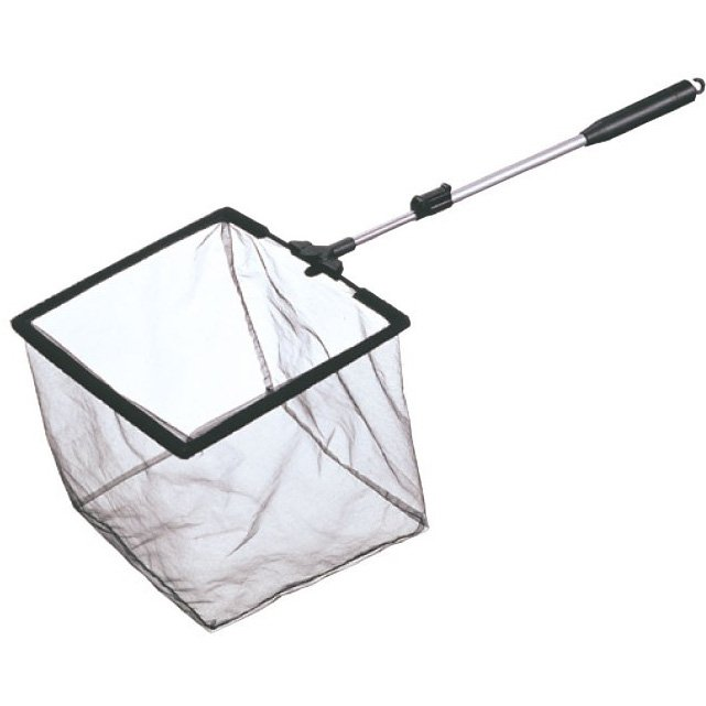 Mini Pond and Fish Nets / Type (Fish) Best Price