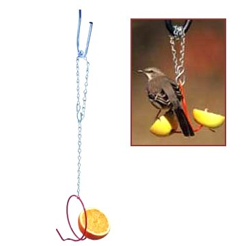 Bird Fruit Feeder 4 in. Best Price