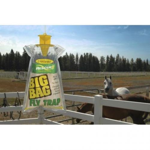 Big Fly Trap  (Case of 12) Best Price