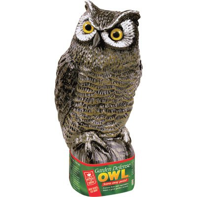 Garden Defense Owl - 7 X 8 X 16 Best Price