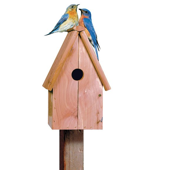 Aromatic Cedar BlueBird House Best Price