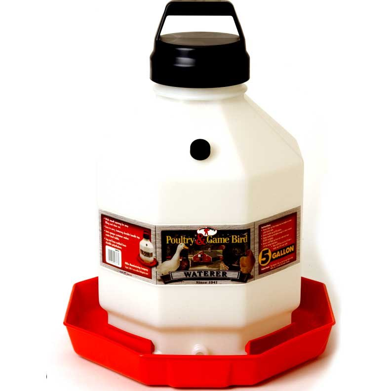 Poultry Fountain - Auto Waterer / Size (5 Gallon) Best Price