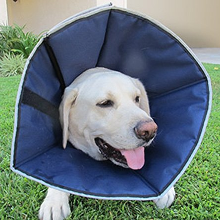 Procone Soft Recovery Collar / Size Large