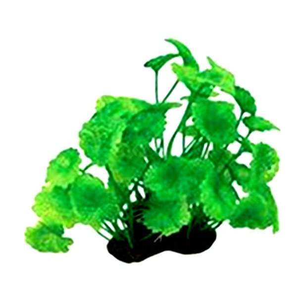 Tropical Elements Hydrocotyle - Green 5 in. Best Price