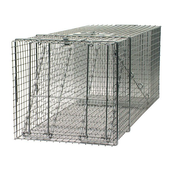 Large Professional Raccoon Trap - 42X15X15 in. Best Price