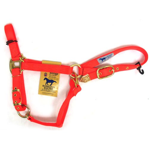 Adj Chain Horse Halter With Snap - Orange / Average Best Price