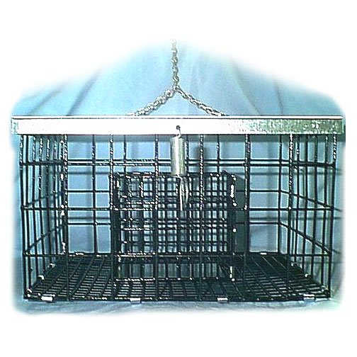 Squirrel and Starling Proof Suet Feeder - 10.5 X 9 Best Price