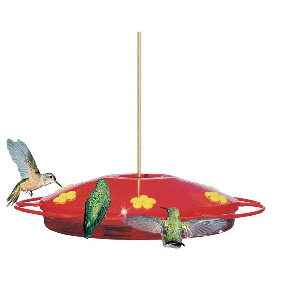 Hummingbird Oasis Red Feeder Best Price
