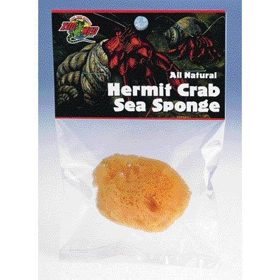 Hermit Crab Sea Sponge Best Price