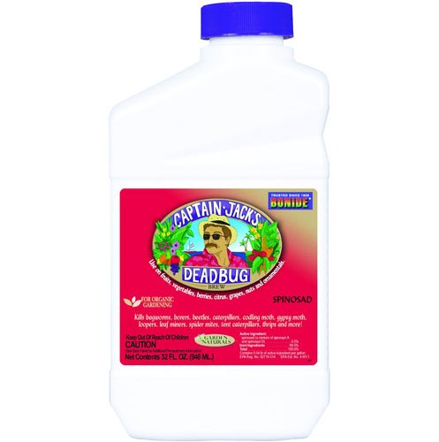 Deadbug Brew Concentrate - 1 Qt. Best Price
