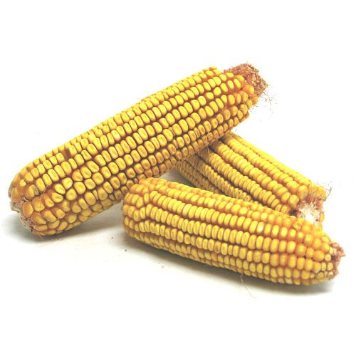 Corn On The Cob 40 lbs Best Price