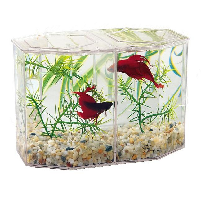 Dual betta hex with gravel and plant large aquarium for Large betta fish tank