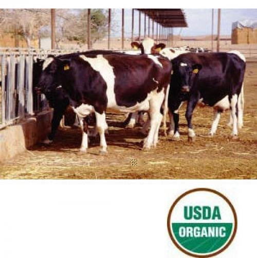 Thorvin Organic Kelp for Animals - 50 lbs Best Price