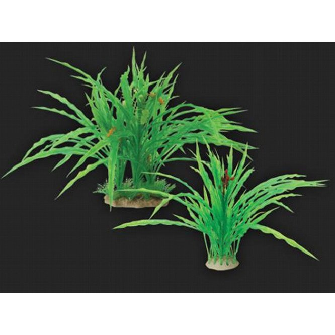 Tropical Elements Crypt - Green 6 in. Best Price
