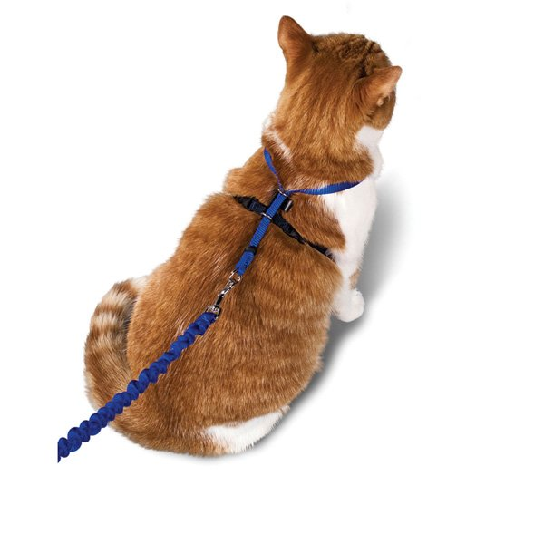 Come With Me Kitty Harness Bungee Leash / Size Medium Blue