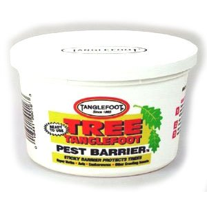 Tree Tanglefoot Pest Barrier / Size (8 oz.) Best Price