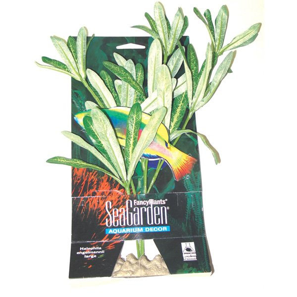 SeaGarden Halophila engelmannii Saltwater Plant - Large Best Price