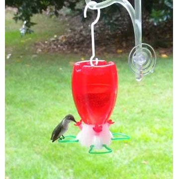 Prefilled Hummingbird Feeder Best Price
