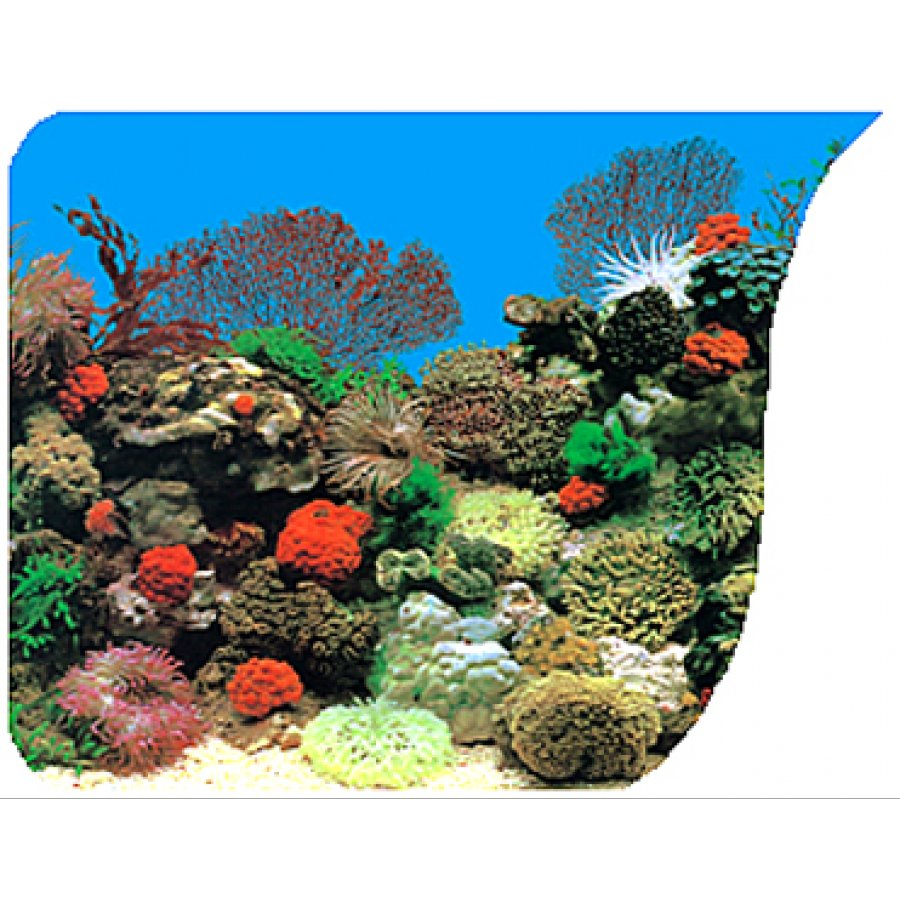 Coral Anenome & Freshwater Planted Background - 50 FT X 20 IN Aquarium ...