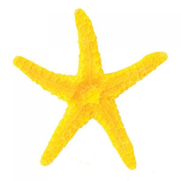 Design Elements Slender Common Starfish Ornament Best Price