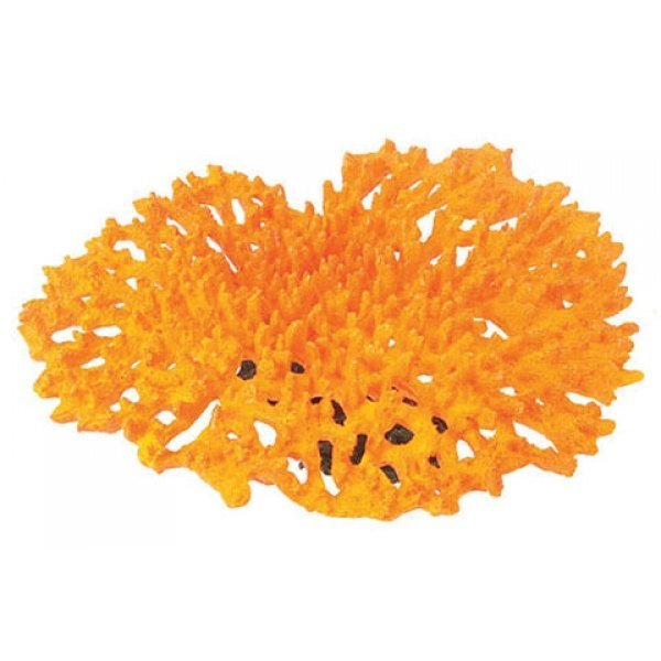 Design Elements Tabletop Acropora Coral Ornament Best Price