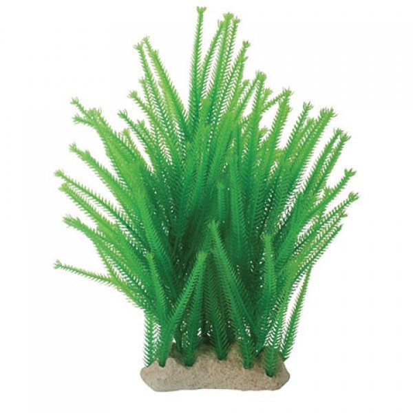 Natural Elements Club Moss - 8-12 in. Best Price