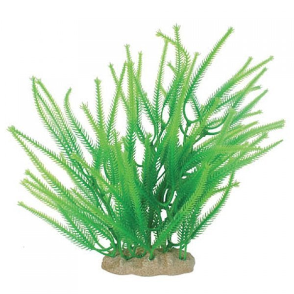 Natural Elements Club Moss - 9-10 in. Best Price