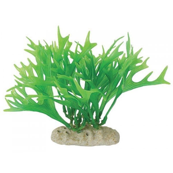 Natural Elements Antler Fern - 5-6 in. Best Price