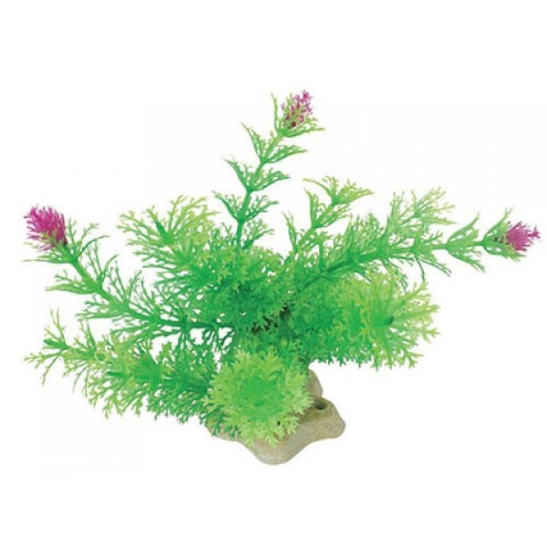 Natural Elements Ambulia / Size (5-6 in. with Flowers) Best Price