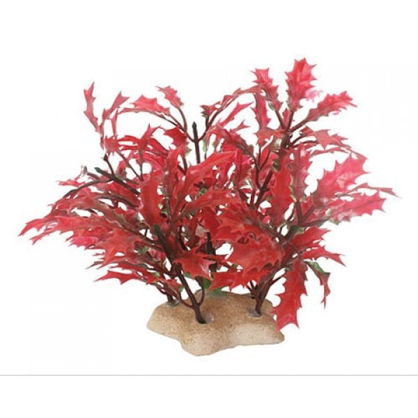 Natural Elements Crimson Water Holly - 4-5 in. Best Price
