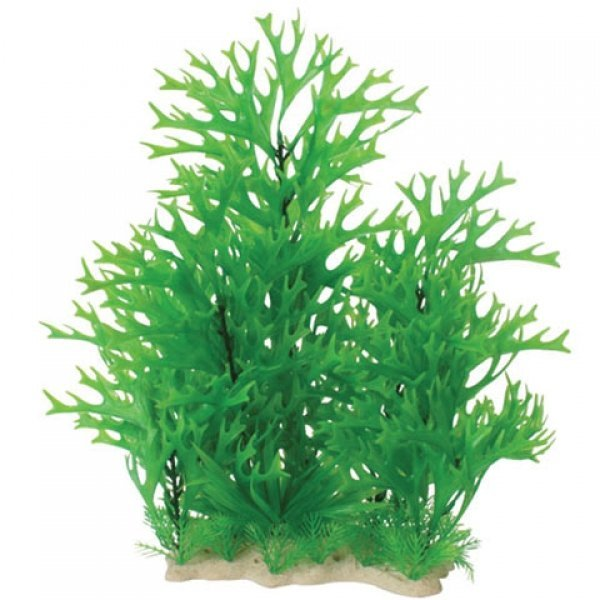 Natural Elements Antler Fern Combo - 12-18 in. Best Price