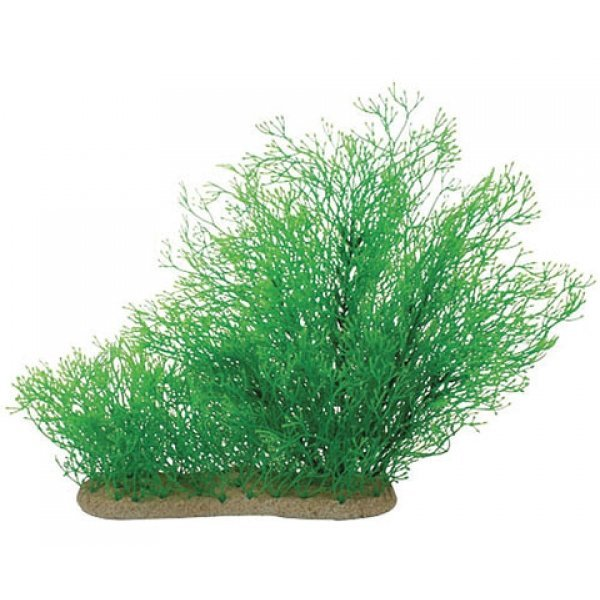 Natural Elements Java Moss - 10-16 in. Best Price