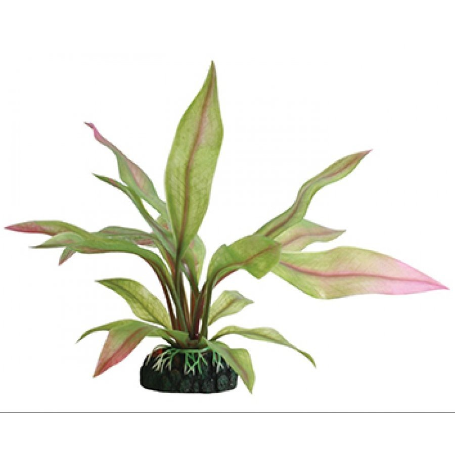Tropical Elements Crispus - Red / 8 in. Best Price