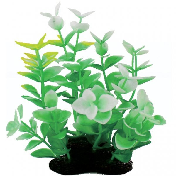 Tropical Elements Bacopa Carolina - 5 in. Best Price