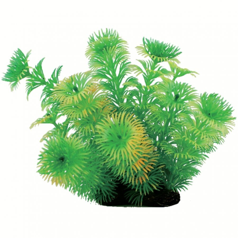 Tropical Elements Cabomba Green / 5 In.