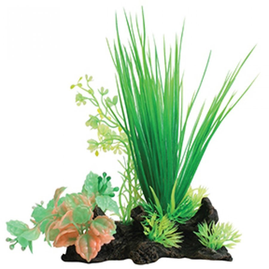 Tropical Elements Hairgrass/ Ludwigia Combination - Green / 8 in. Best Price