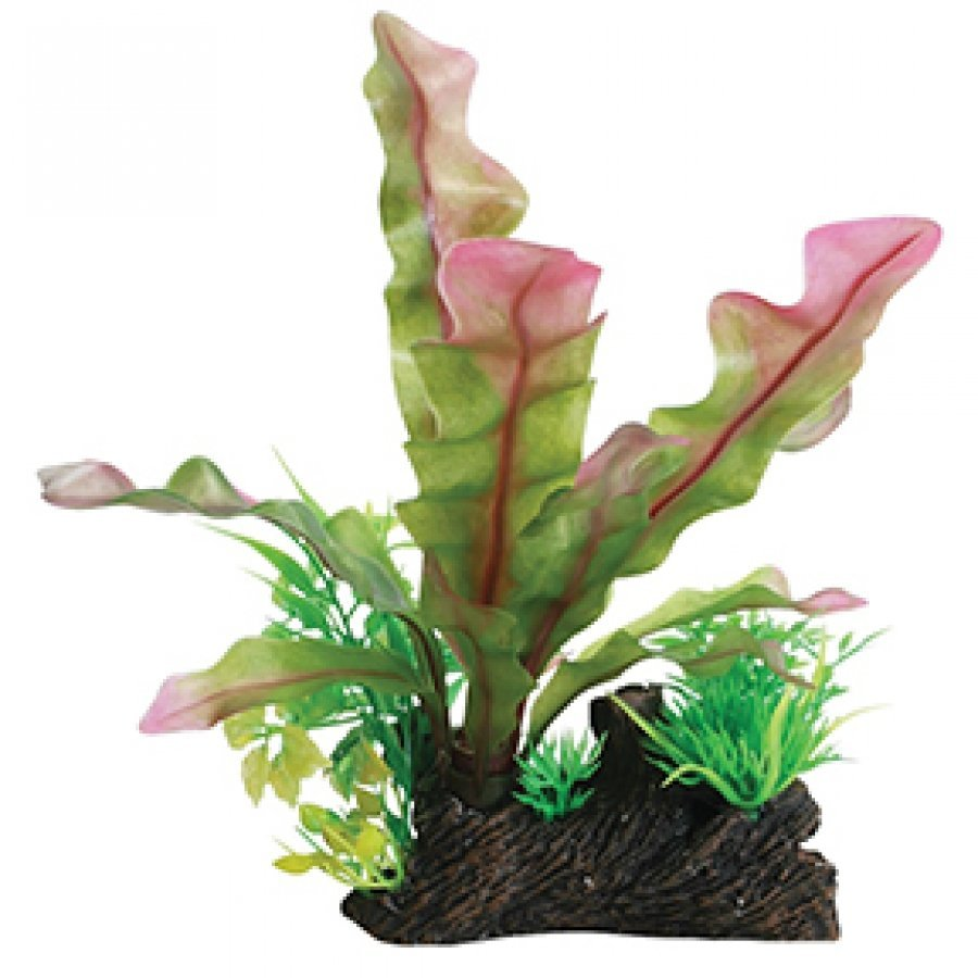 Tropical Elements Ulvaceus Combination - Red / 8 in. Best Price