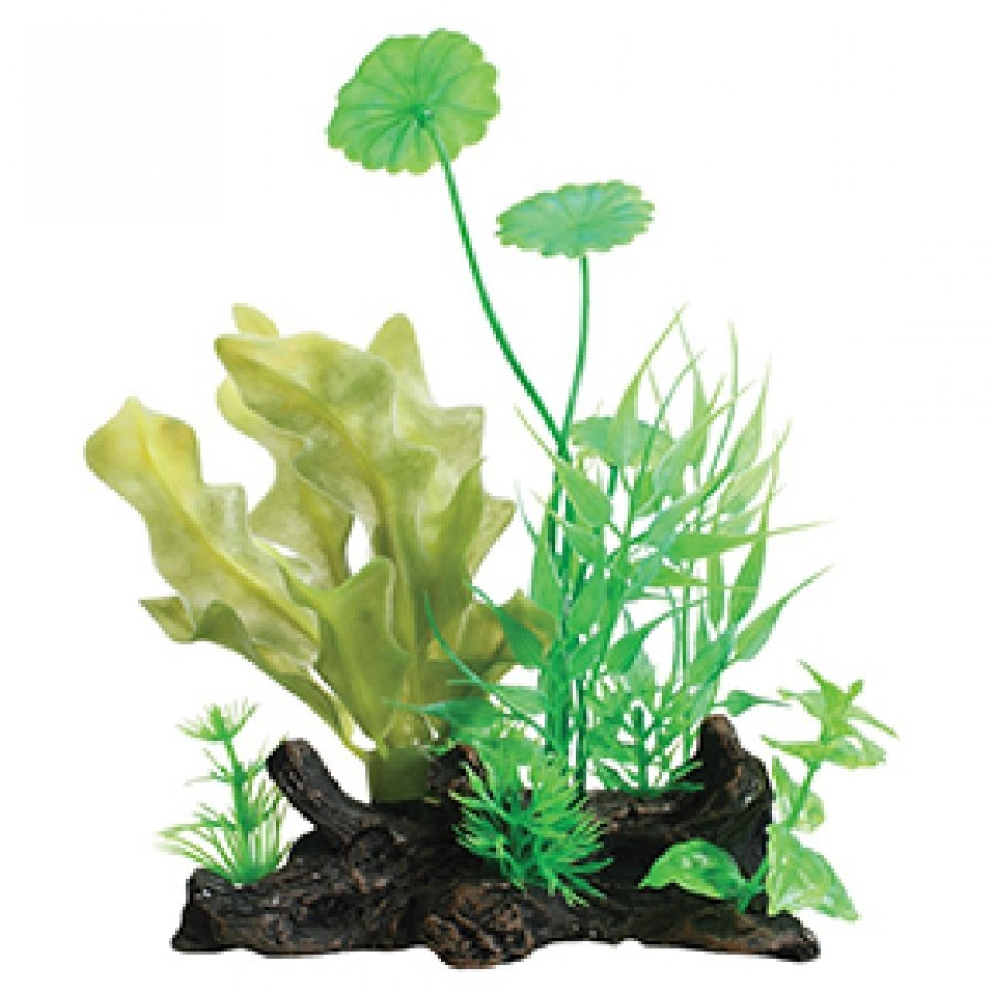 Tropical Elements Ulvaceus/ Hydrocotyle Combination - Green / 8 in. Best Price