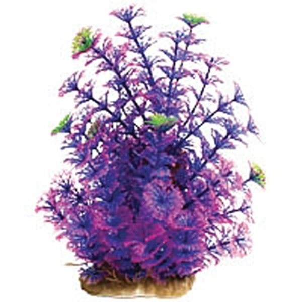 Natural Elements Technicolor Cabomba - Purple 10-12 in. Best Price