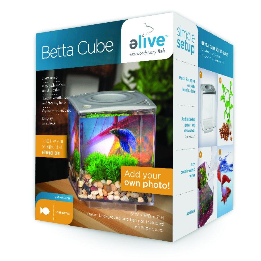 Betta Cube