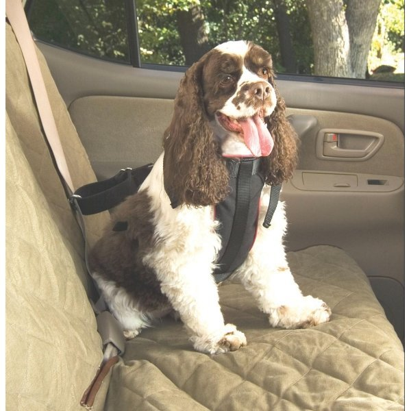 Pet Vehicle Safety Harness / Size (Medium) Best Price