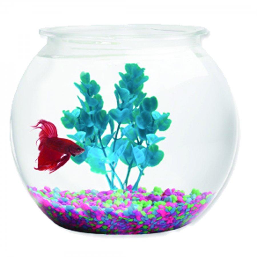 Aqua accents round plastic bowl 2 gallon aquarium for Large plastic fish bowl