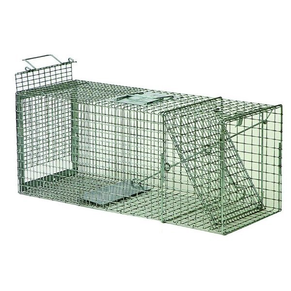 Safeguard Box Trap  Rear Release 30 inches Best Price