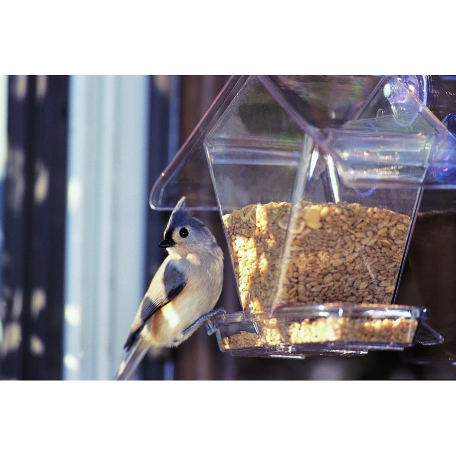 Aspects Window Cafe Bird Feeder - 3/4 qt. Best Price