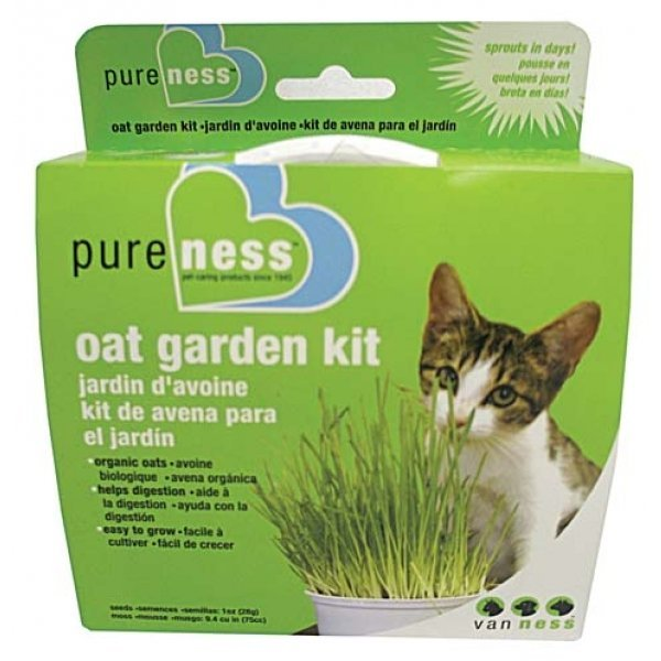 Oat Garden Kit for Cats Best Price