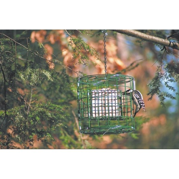 Hanging Suet Wild Bird Sanctuary Best Price