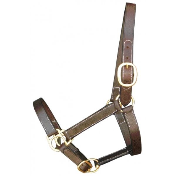 Equine Halter Stable / Size (Cobb) Best Price