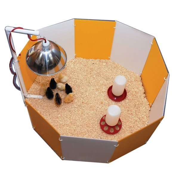 Baby Chick Starter Home Best Price