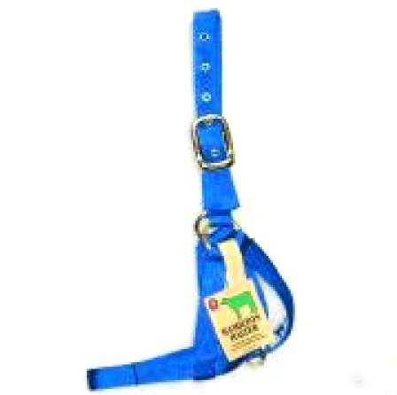 Nylon Calf Turnout Halter - 1 inch / Color (Blue) Best Price